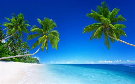 Tropical Beach Paradise 5K Wallpapers | HD Wallpapers | ID