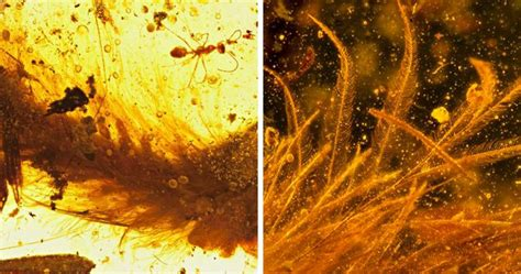 First Dinosaur Tail Found Preserved In Amber Is 99-Million