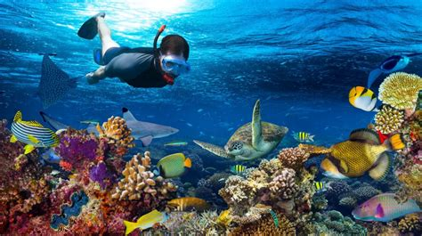 The Best Time for Diving and Snorkeling in Zanzibar