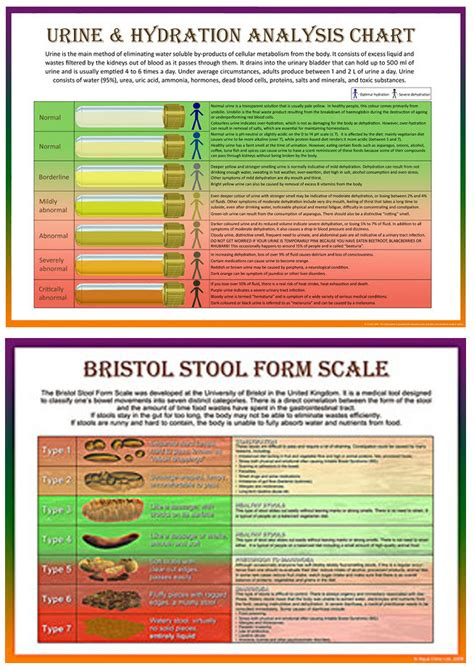 Set of Two: Bristol Stool Scale & Urine & Hydration