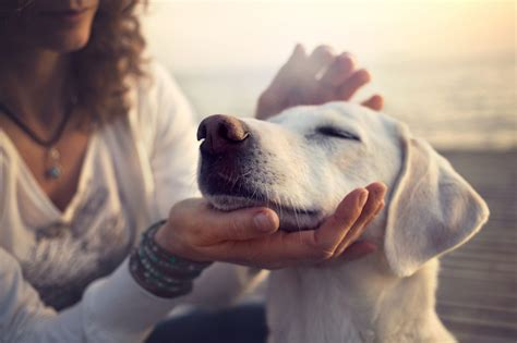 This Dog Flu Vaccine May Help Protect Owners Too - Health